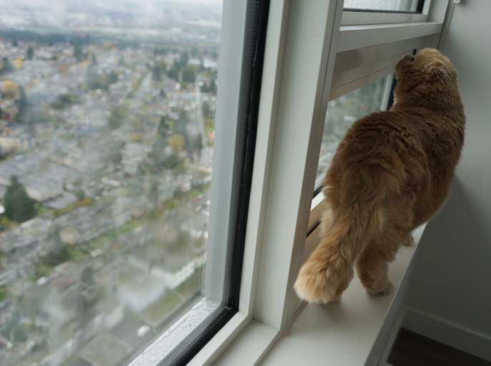 cat walking on window ledge