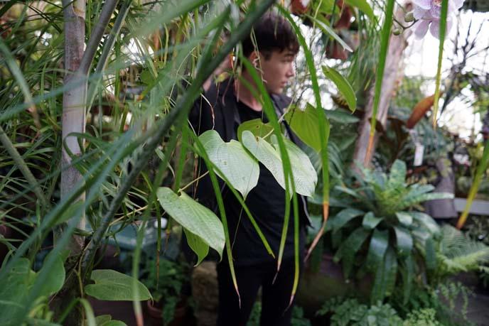 indoor garden, san francisco