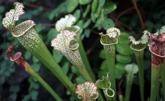 tube shaped plants