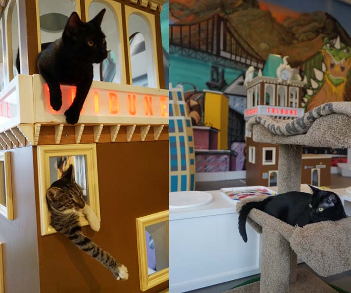 first american cat cafe