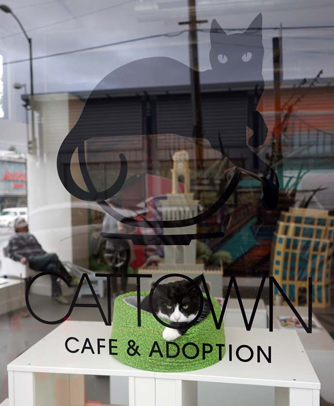cat town adoption, cafe oakland