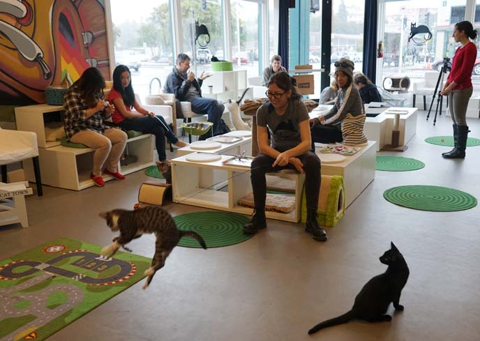 adopt cats, cat cafe usa