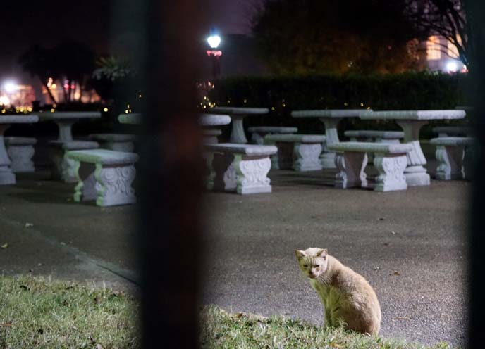 new orleans stray cats