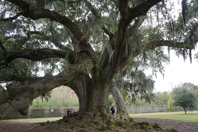 climbing tree of life