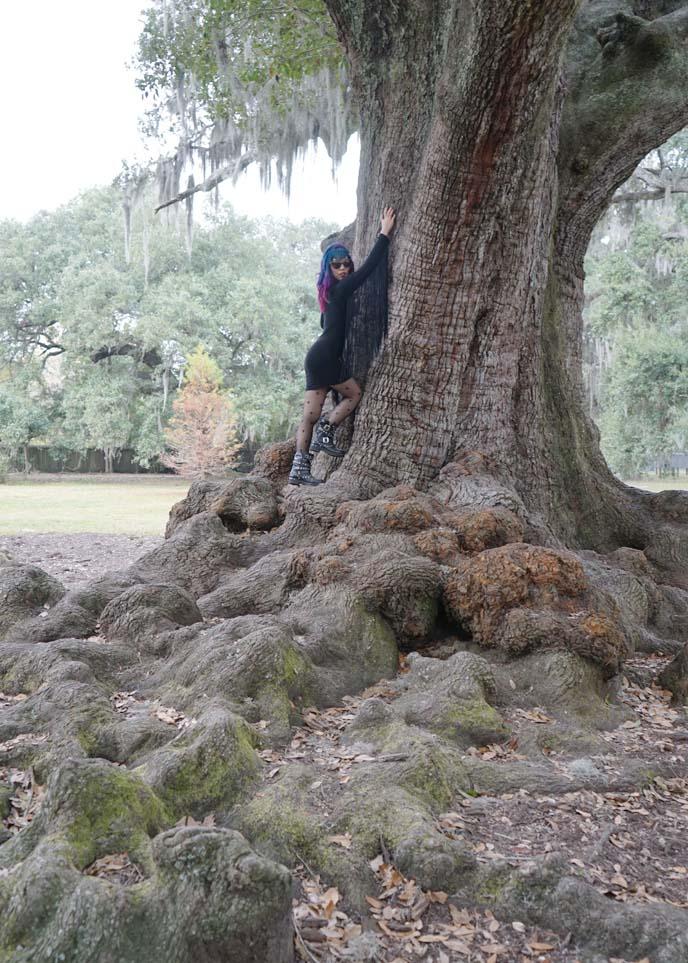 new orleans big tree