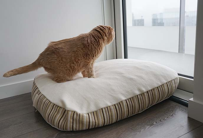 essentia kingston pet bed