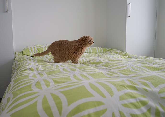 maohaus cat bed decoration
