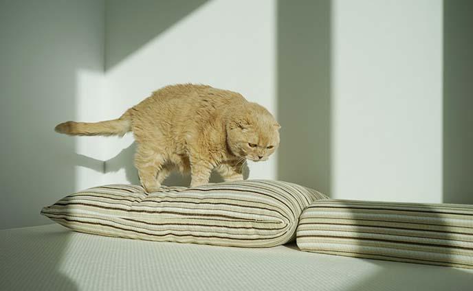 essentia ergonomic pillows