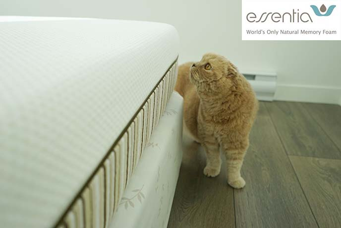 essentia memory foam mattress