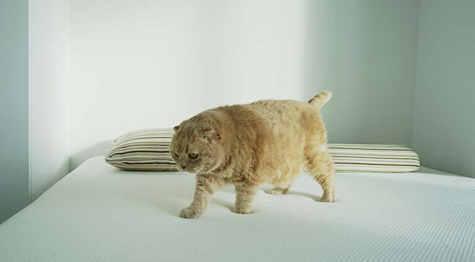 organic essentia mattress