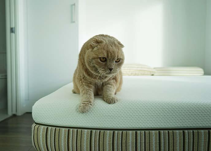 cat sitting on bed corner