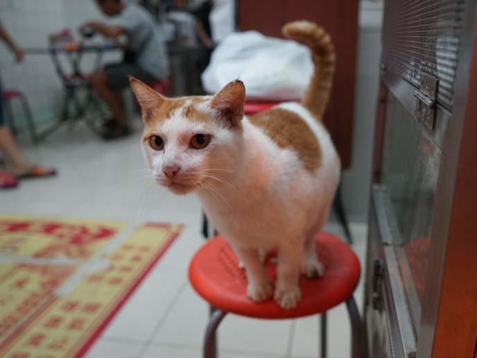 hong kong china cat