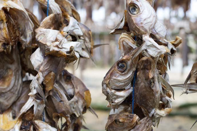 outdoor dried fish heads