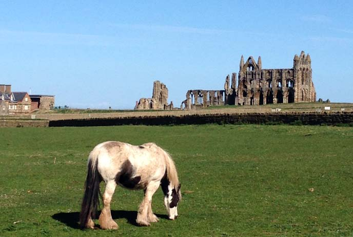 whitby abbey, horses