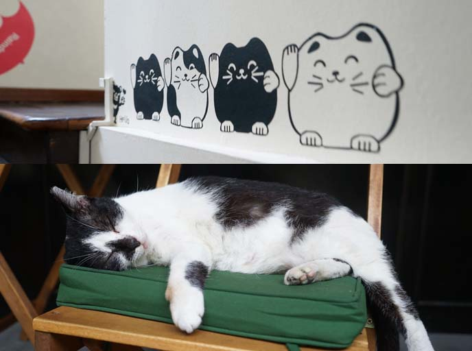 black white cat sleeping