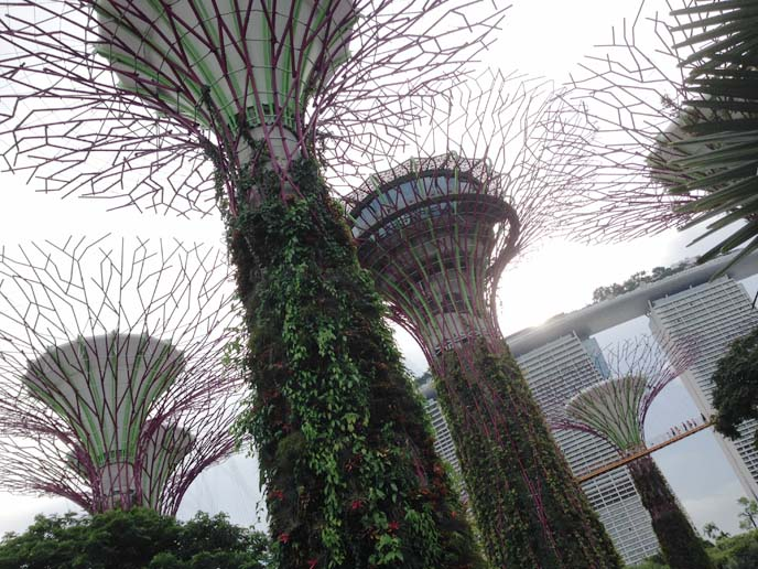 supertree grove, OCBC Skyway