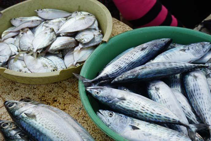 indian ocean fish markets