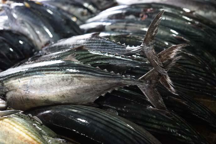 glistening fish tails, fins