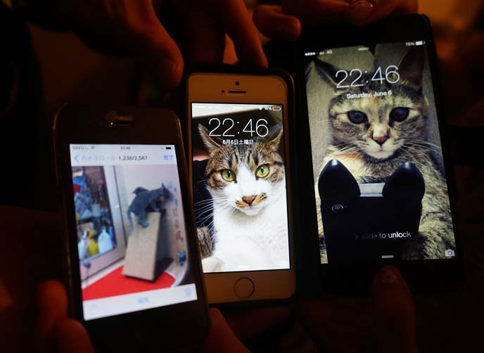 cell phone cat wallpapers