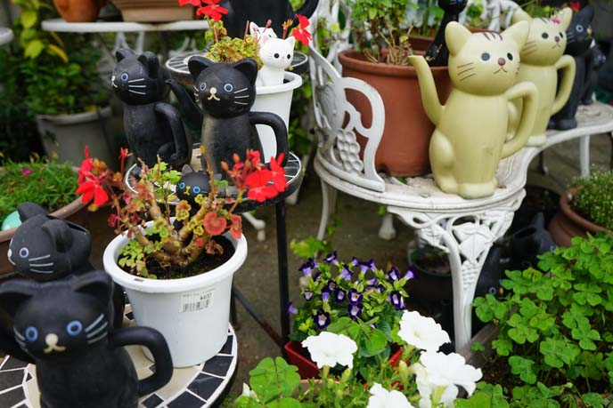cat watering cans, flowers