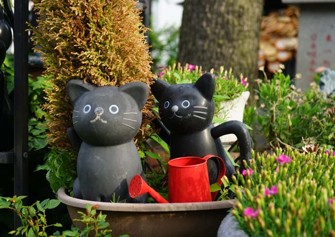 cat watering cans
