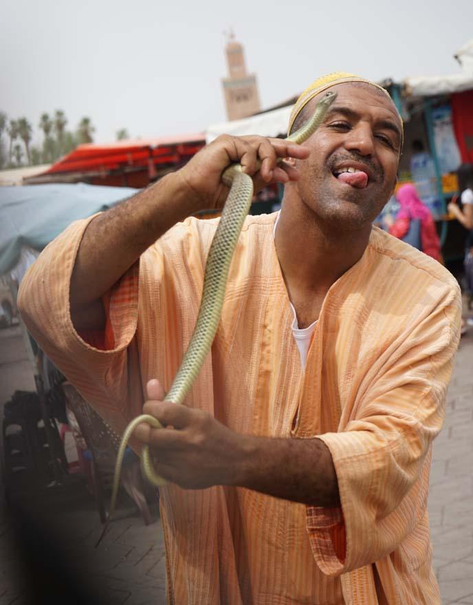 snake charming, cobras morocco