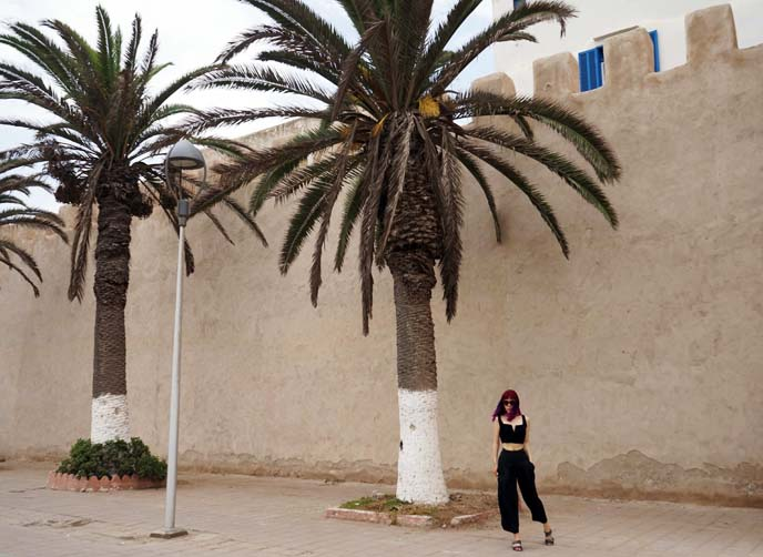 walled city, Essaouira palm trees