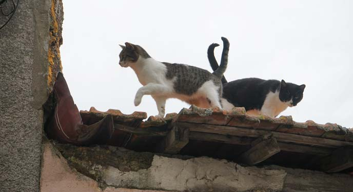 cats tails intertwined