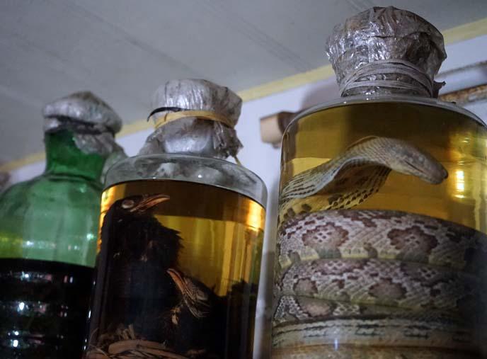 snake wine, bird wine