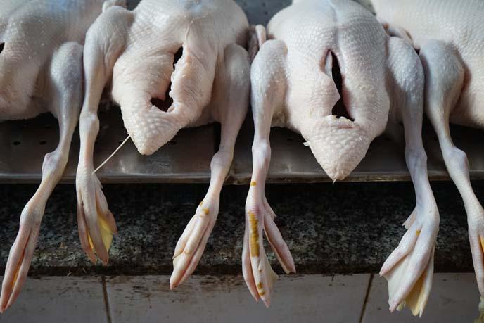 zombie chickens, weird food