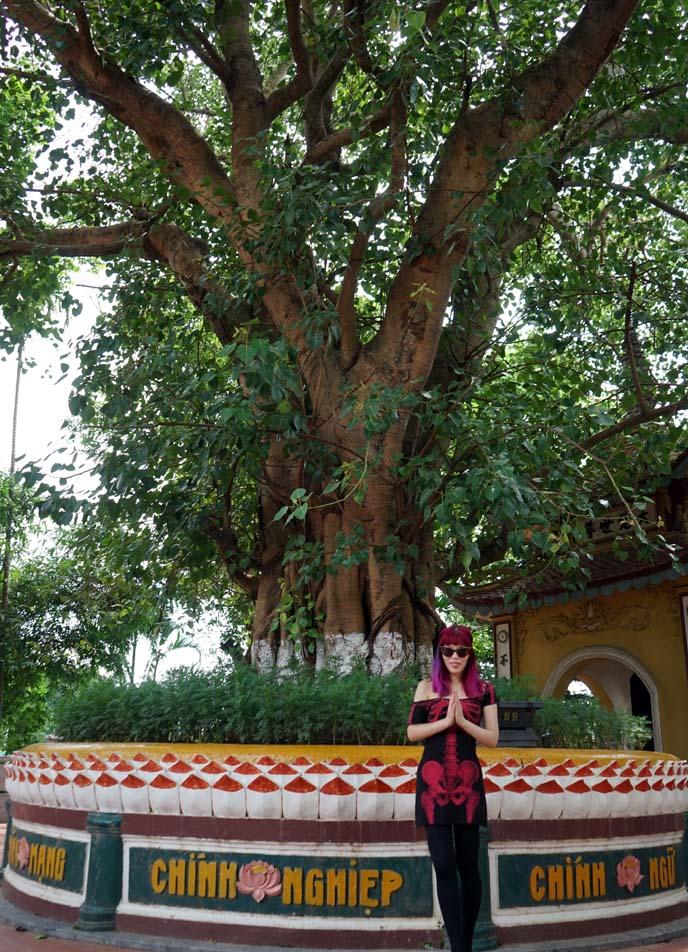 buddha bodhi tree, tran quoc vietnam