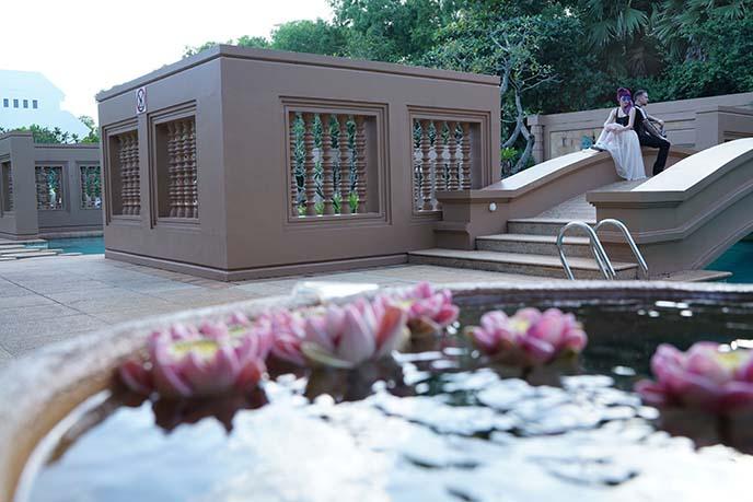cambodia lotus pond
