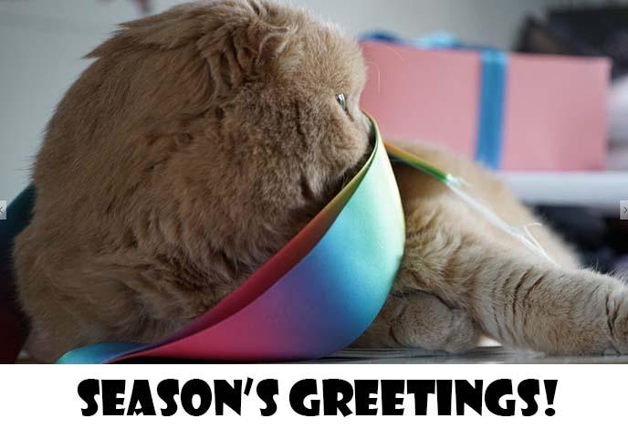 christmas card scottish fold cat, kitten