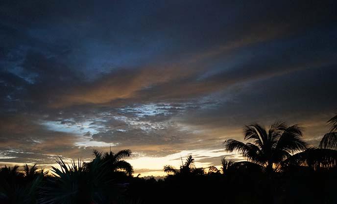 sunrise palm trees sky