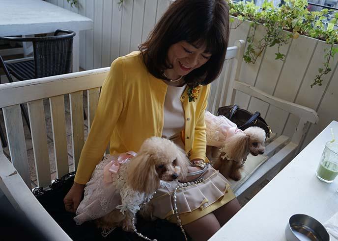deco dog cafe tokyo