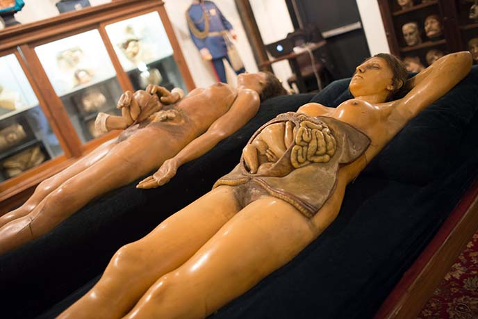historic wax medical bodies