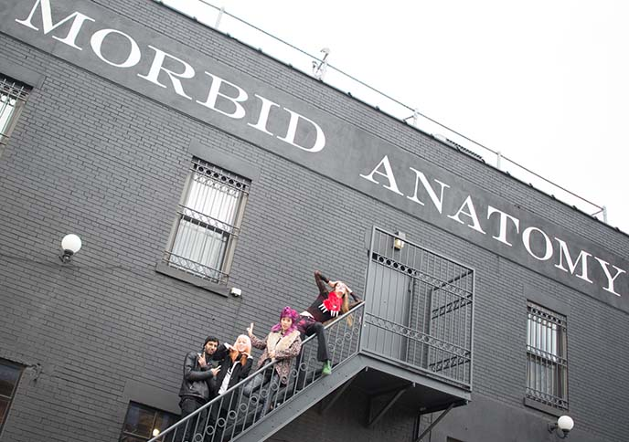 Morbid Anatomy Museum, Brooklyn, New York