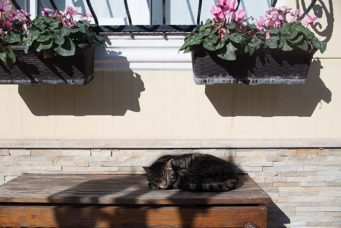 istanbul cats everywhere