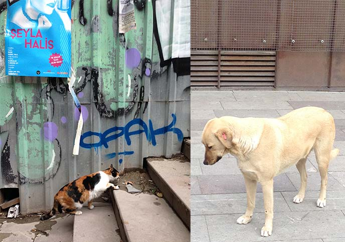 istanbul stray cats dogs