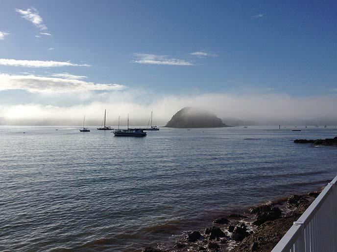 pure new zealand, ocean mist