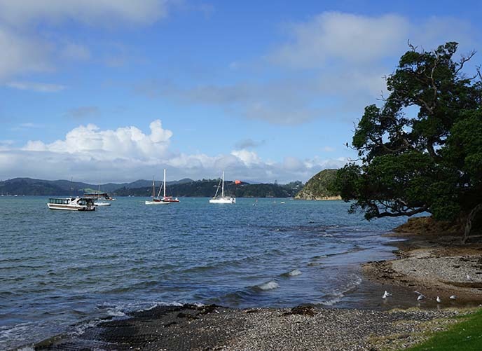 new zealand vacation town paihia