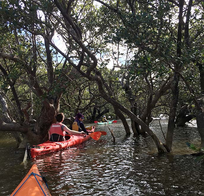 mangrove forest kayaking