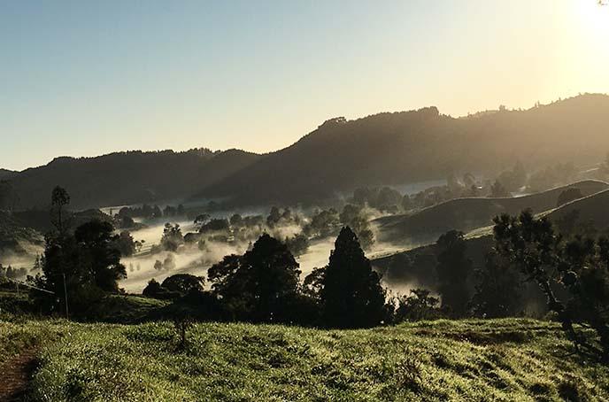 waitomo landscape, new zealand