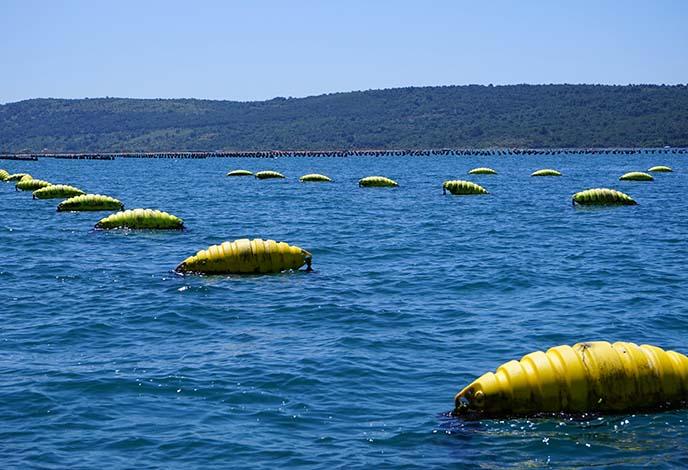 RIBOGOJNICA FONDA, mussel farming