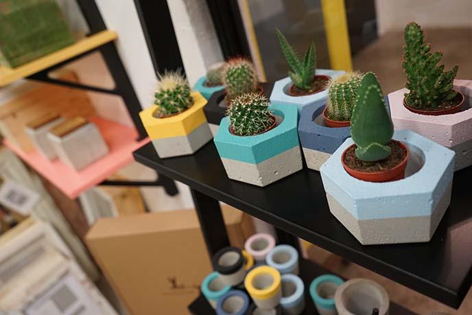 concrete planters, cactus pots