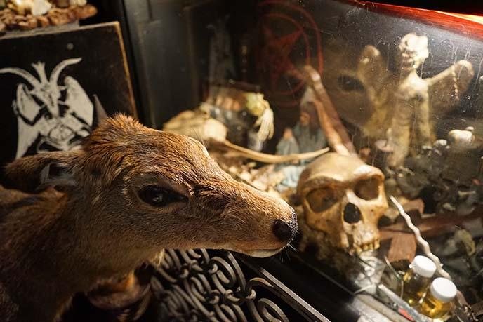 osaka goth gothic shop