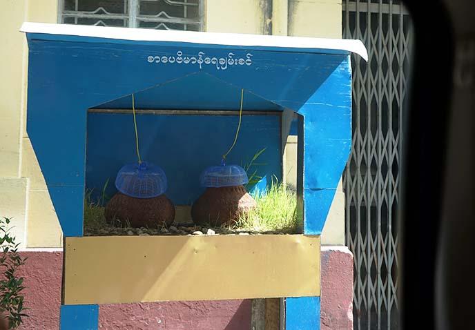 yangon public drinking jug