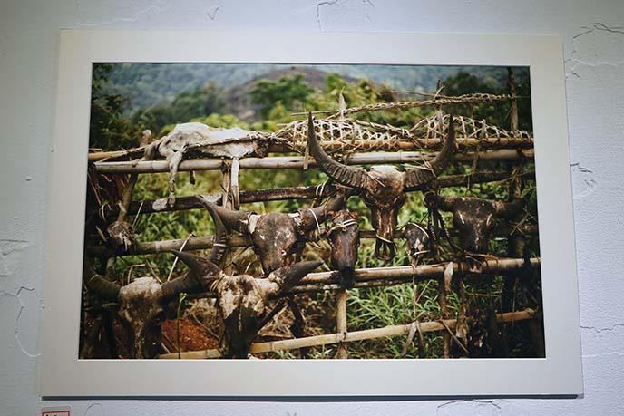 myanmar animal skulls