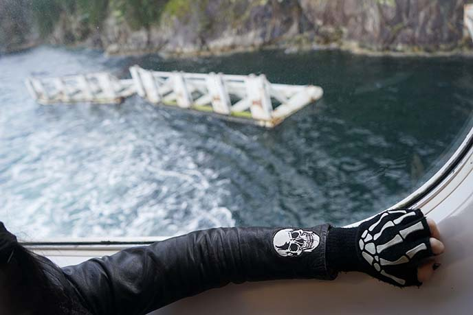 pirate skull glove, patch