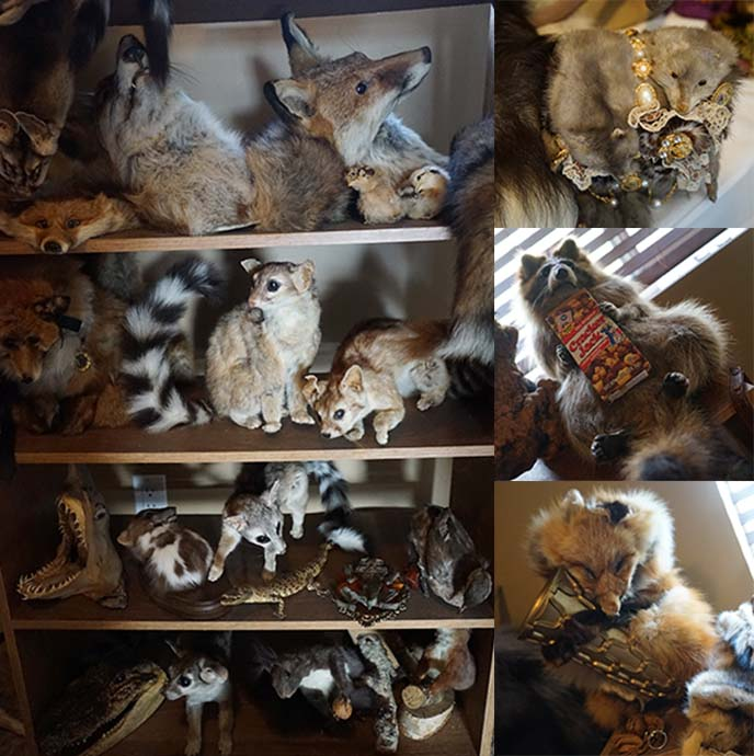 taxidermy collection, goth house
